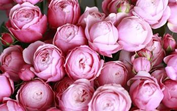 Свежая поставка срезанных цветов