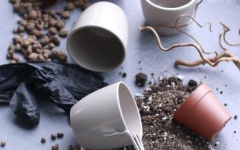 Как пересадить комнатное растение: пошаговая инструкция от выбора горшка и грунта до тонкостей ухода после пересадки