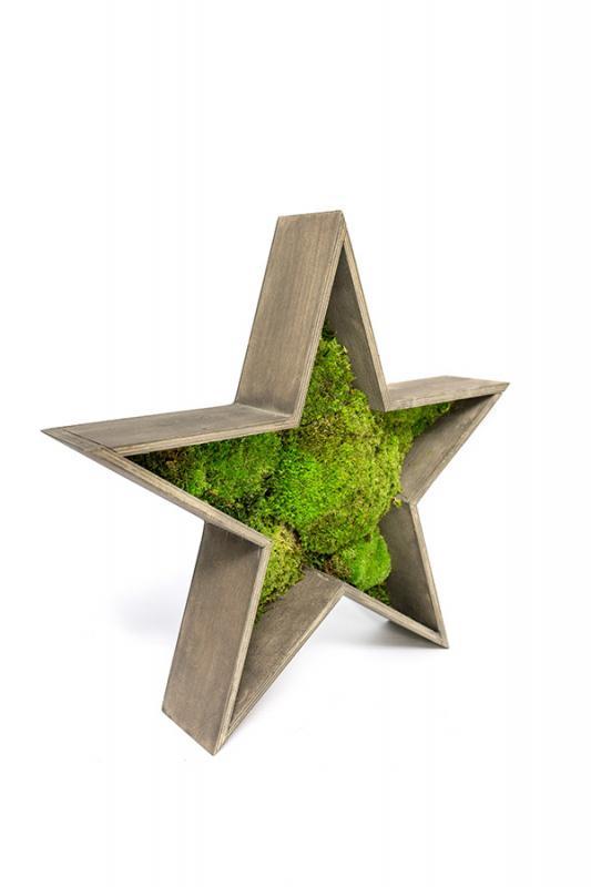 Звезда со стабилизированным мхом