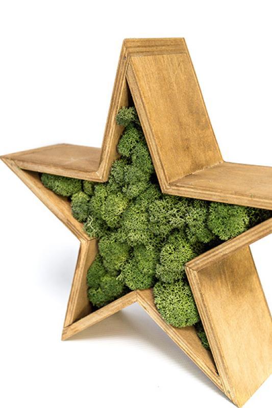 Звезда со стабилизированным мхом 26*26