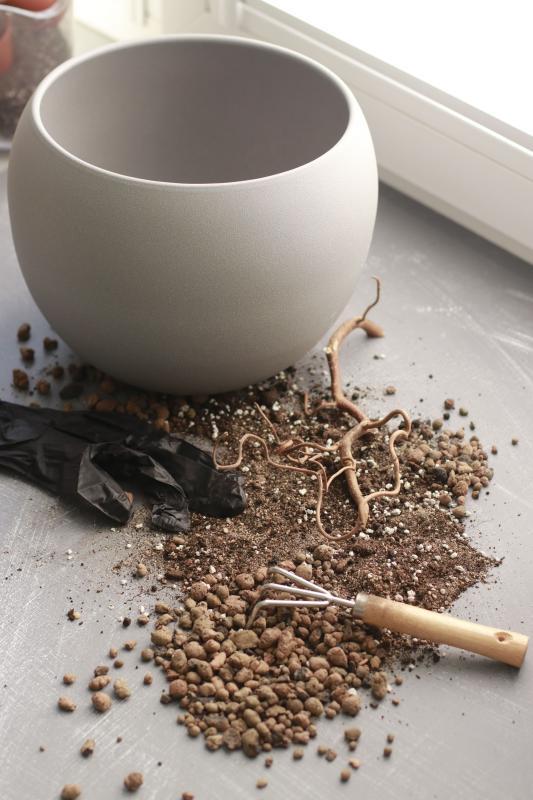 Пересадка растения в кашпо диаметром 21-24 см