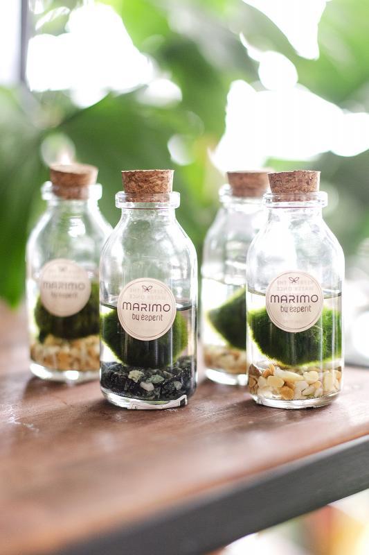 Кладофора шаровидные водоросли/ Waterplant Cladofora