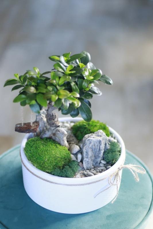 Мини-сад с бонсаем и горной породой